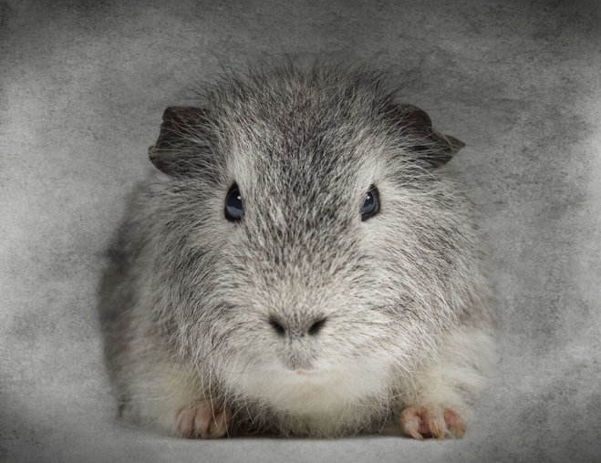 You and I: guinea pigs for Microsoft
