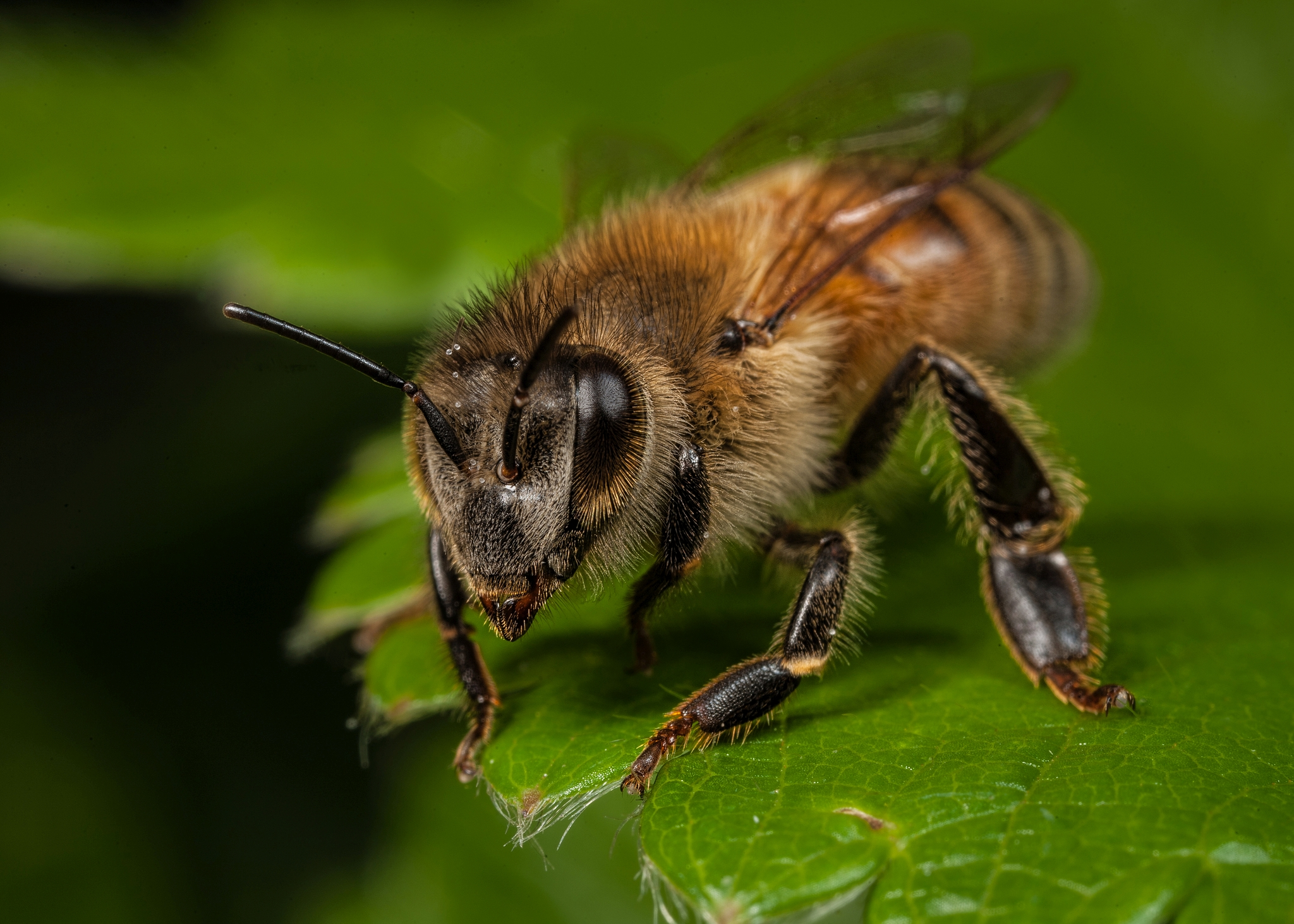 An exceptionally busy bee