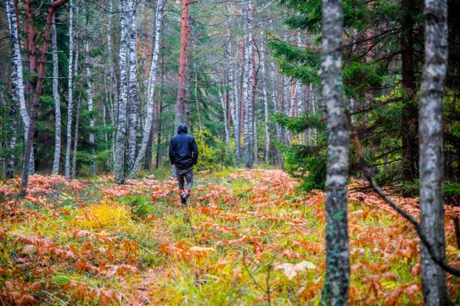 Einfach mal durch den Wald spazieren