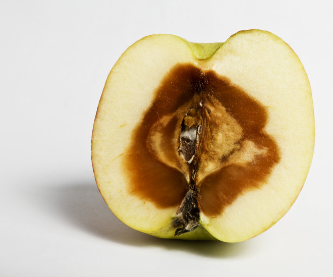 Some apples are rotten on the inside