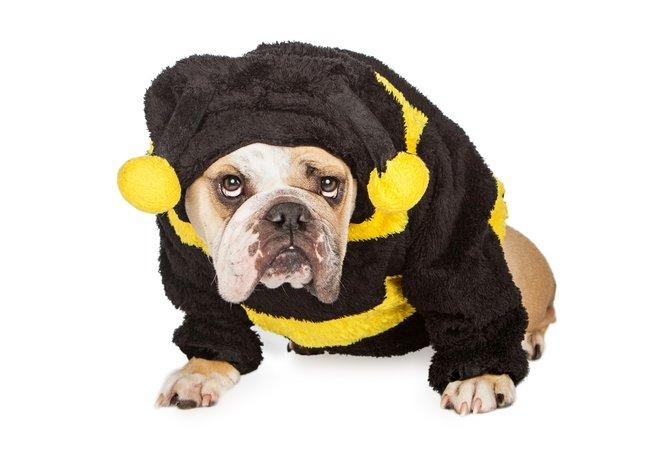Ashampoo bumblebee squad