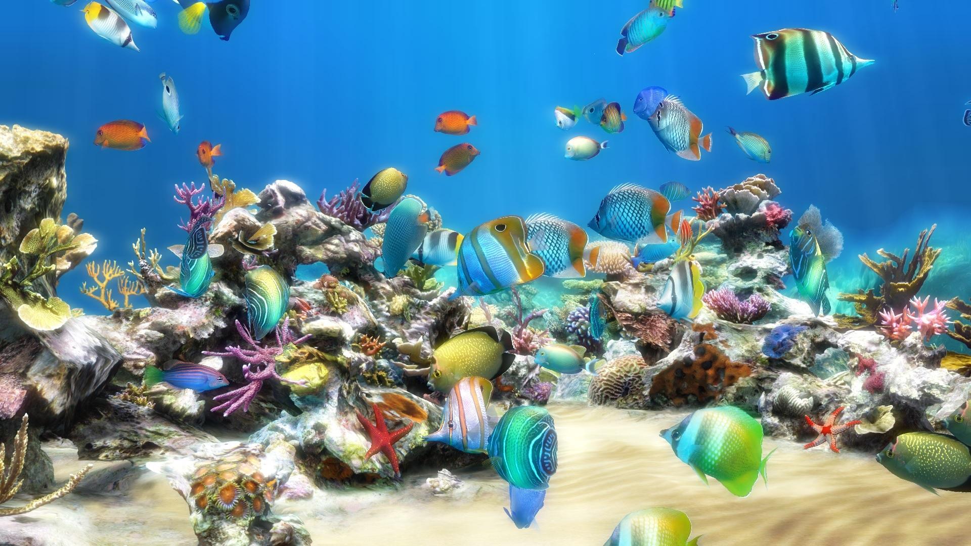 Картинки на рабочий стол анимация рыбки, юбилеем свету красивые
