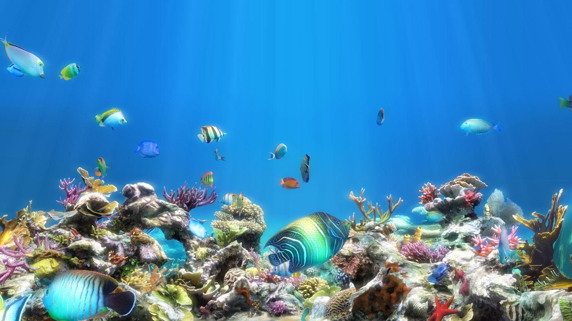 Картинки на рабочий стол анимация аквариум, рождением сына